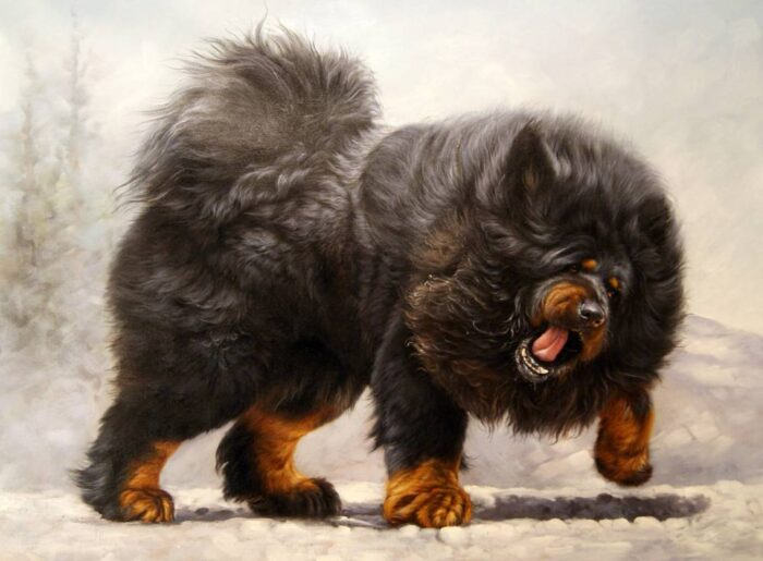 tibetskij-mastif-2