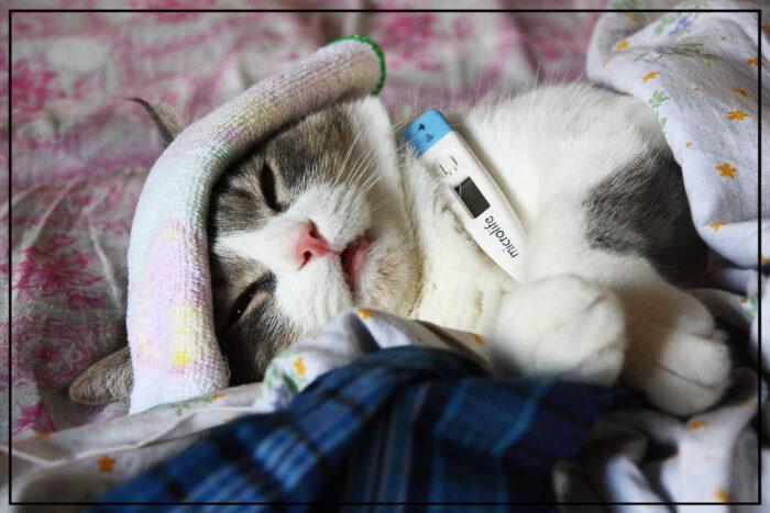 Температура у кошек