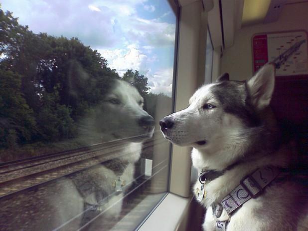 Перевозка собак в поезде