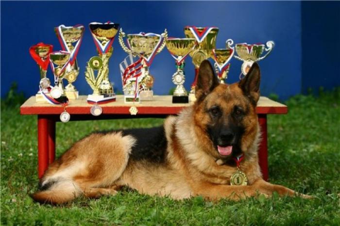 Титулы собак