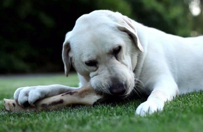 Можно ли собаке кости?