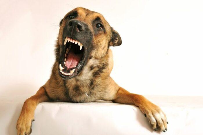 Укусила собака
