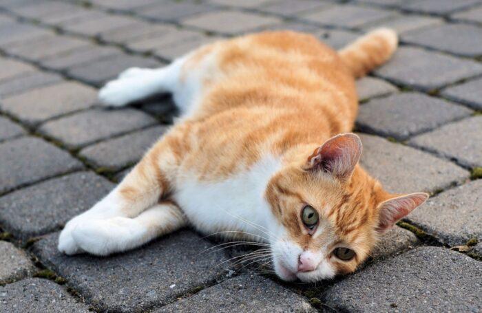 Успокоить кота