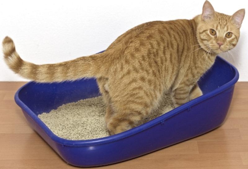 Мочекаменная болезнь у котов помощь в домашних условиях
