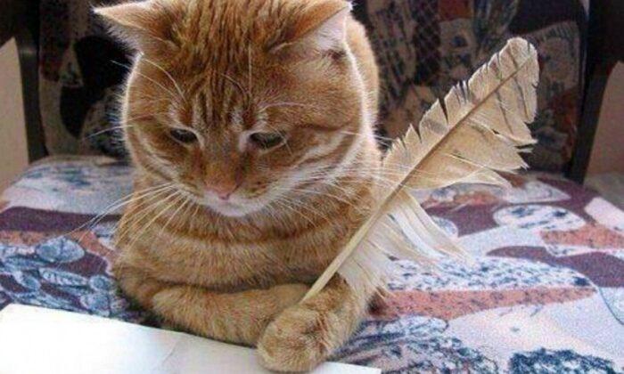 Почему кошка делает это