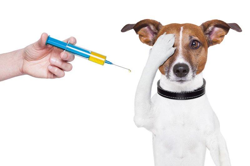 Image result for вакцинация собак