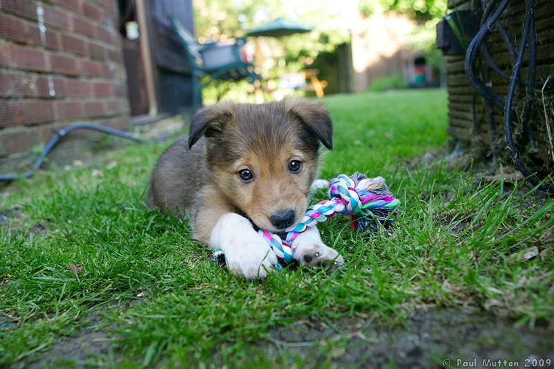 Как сделать чтобы щенок не грызть