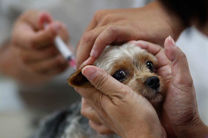 Прививки щенкам