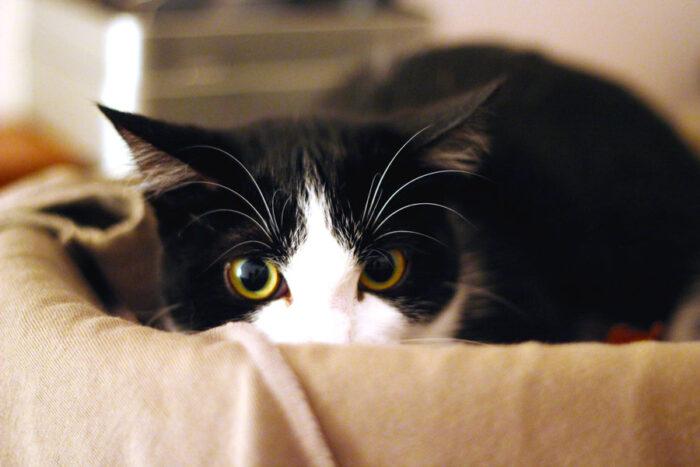 Кошки боятся шума