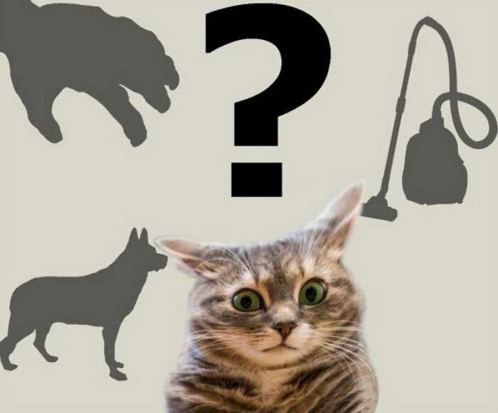 Чего еще боятся кошки?