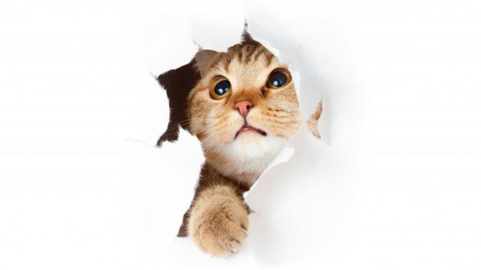 Отучить кошку драть обои и мебель