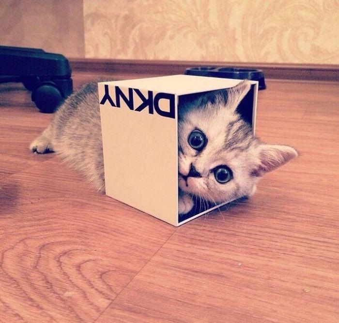 почему коты любят коробки