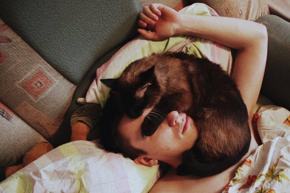 Почему кошки любят спать с людьми