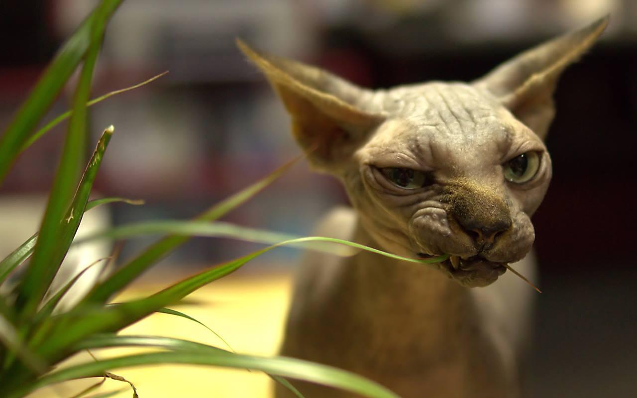 как посадить траву для кошек
