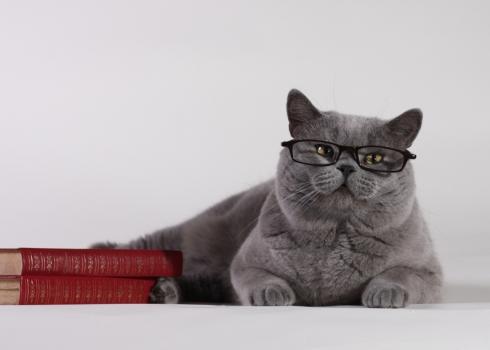 самые умные кошки в мире топ 10