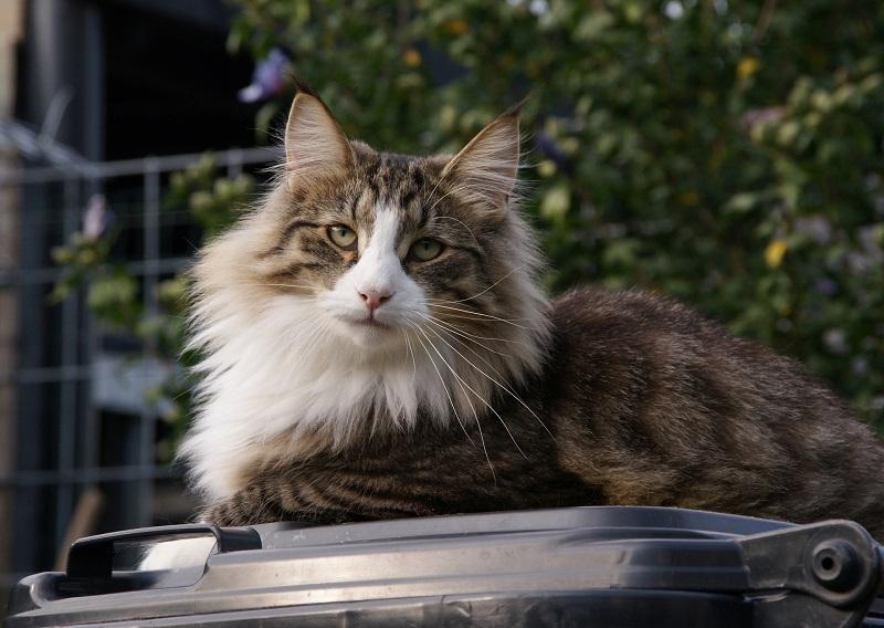 самые умные породы кошек топ 10