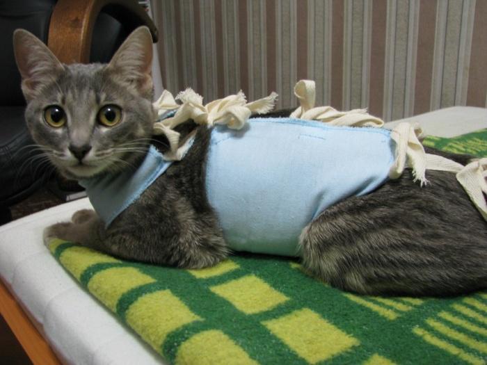стерилизация кошек в каком возрасте лучше делать