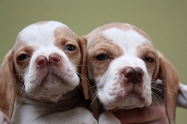самые страшные собаки фото