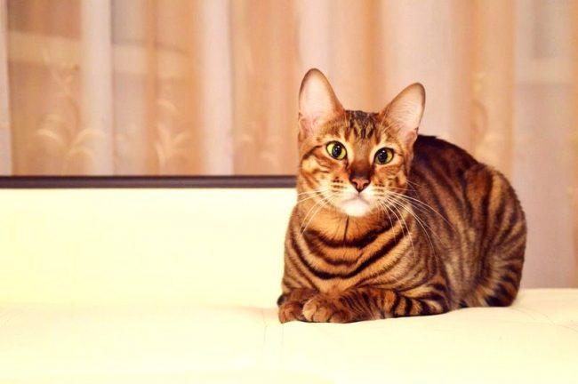 самая дорогая кошка в мире фото