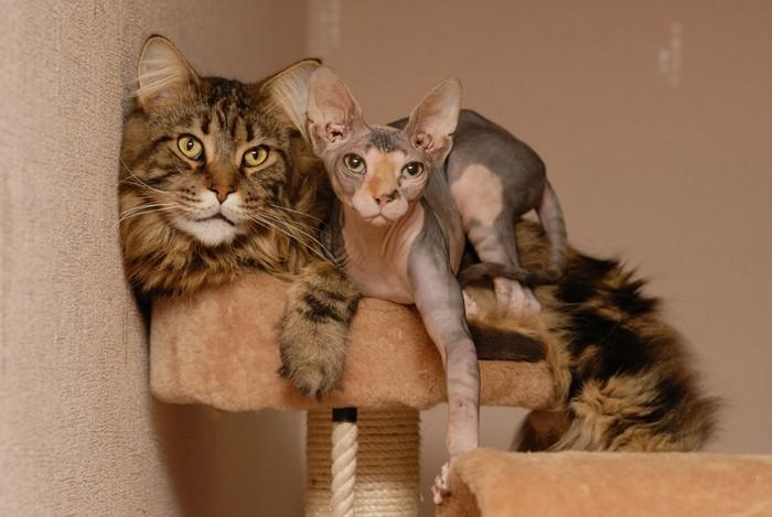 зависимость роста кота от породы