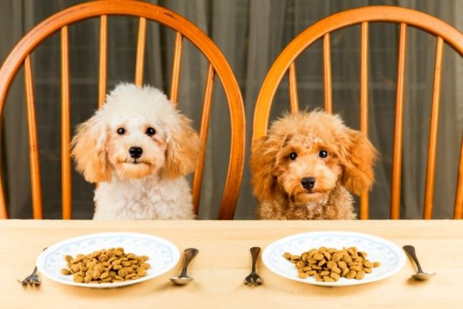 как перевести собаку на другой корм