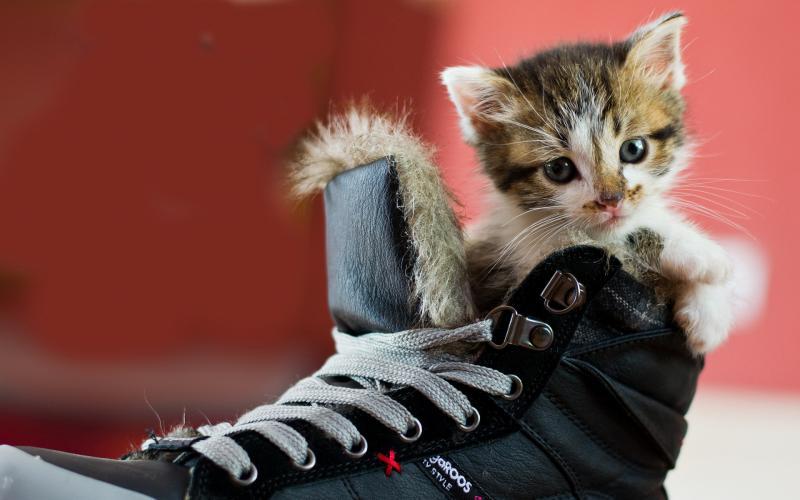 кошка пометила обувь как избавиться от запаха