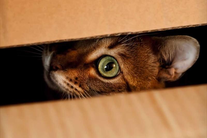 кот прячется в темные места
