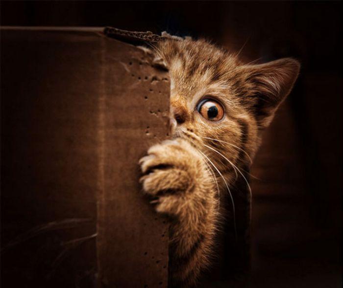кошка прячется в темные места