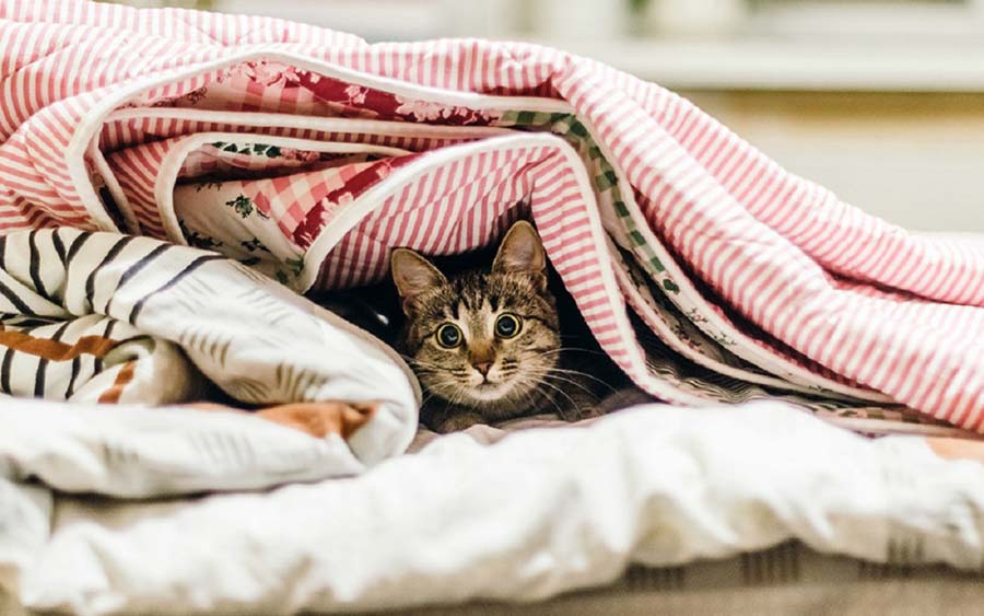 кот прячется под одеяло