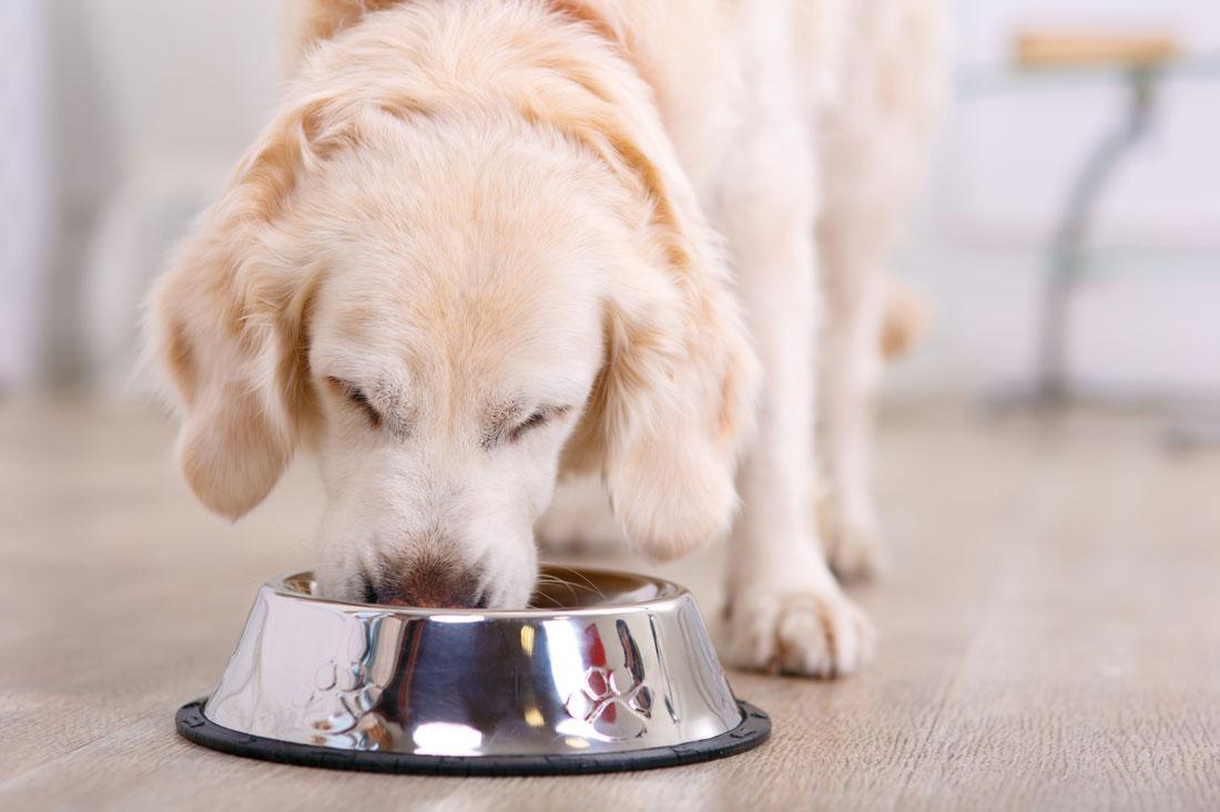Когда следует переводить собаку на сухой корм