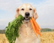 как перевести собаку с корма на натуралку