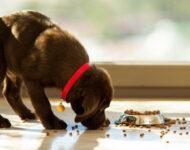 почему собака не ест сухой корм