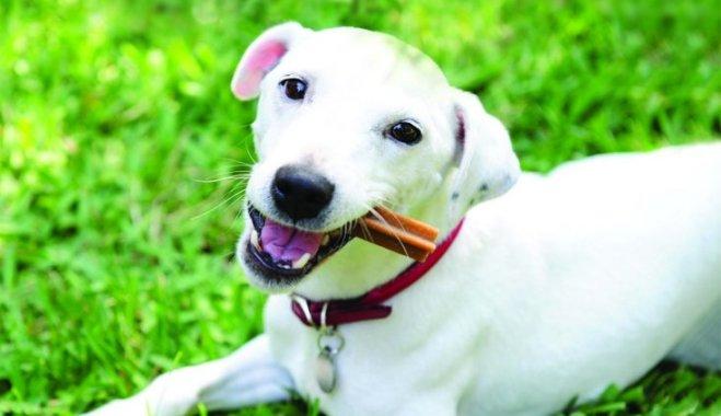 натуральная пища полезнее для собак