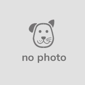 Куплю щенка Шпица (девочка)