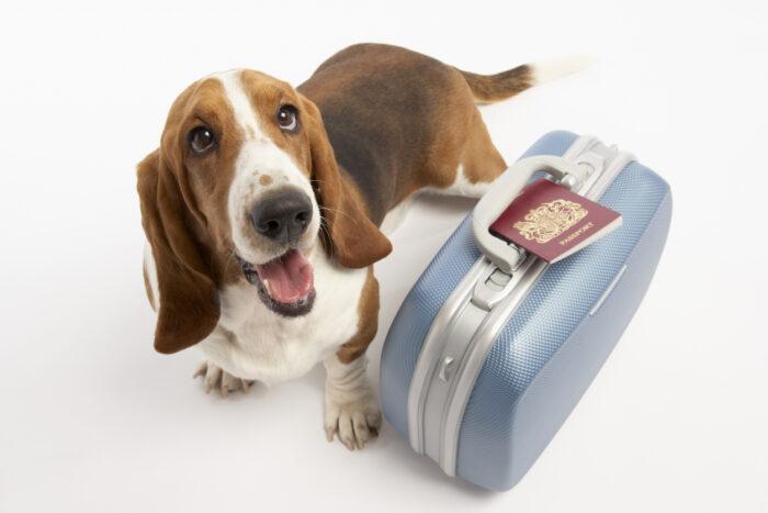 Перевозка собак заграницу