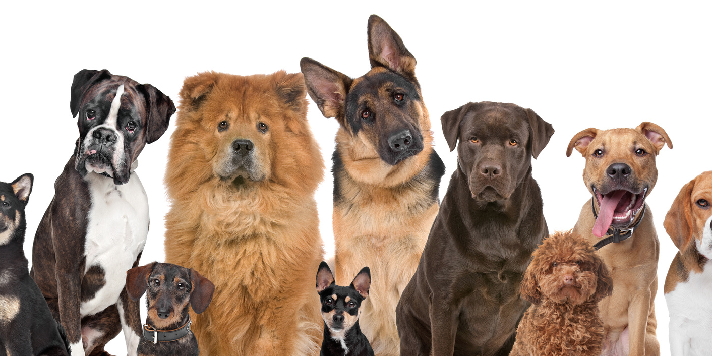 выбор собак с картинками изделия газет имеют