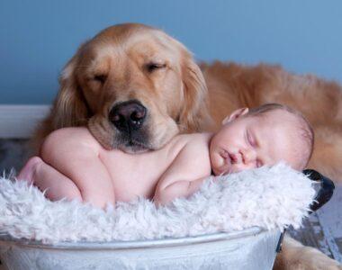Собаки для детей