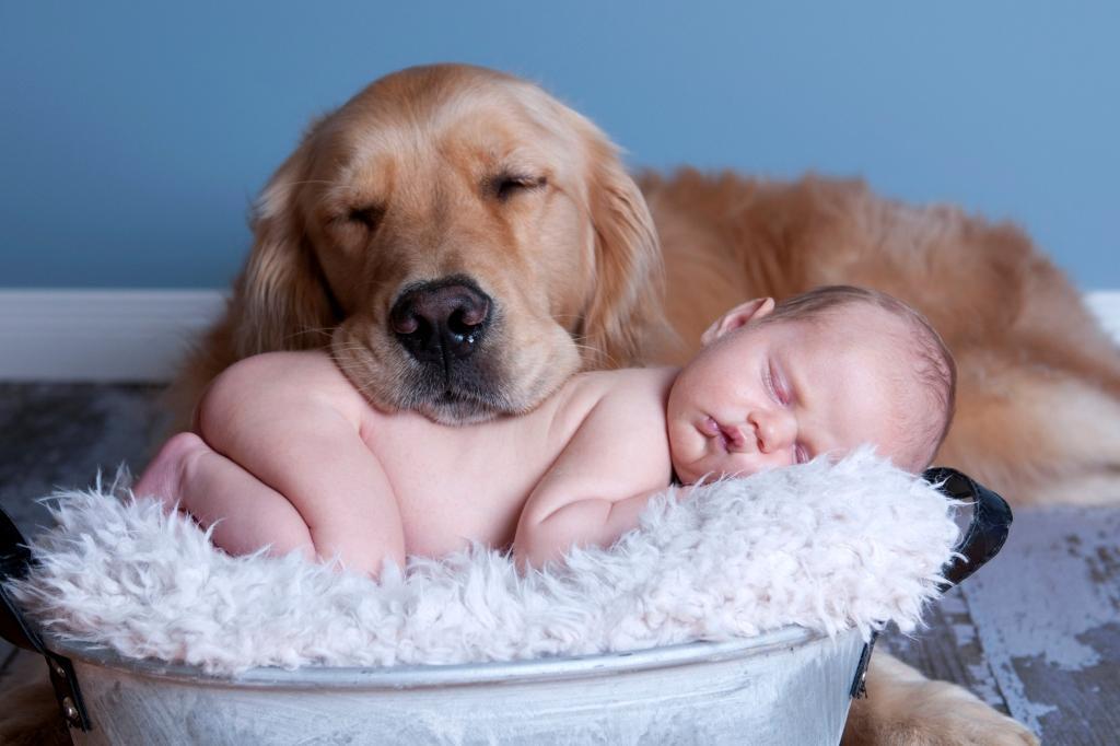 Рабочий, смешные картинки с собаками для детей