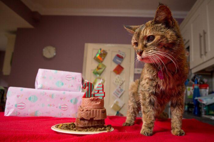 Самая пожилая кошка в мире