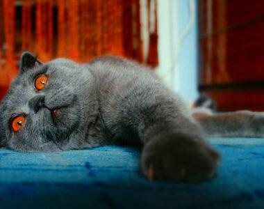 К чему снятся кошки?