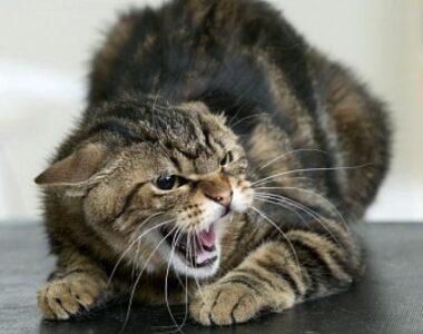 Зараженные кошки