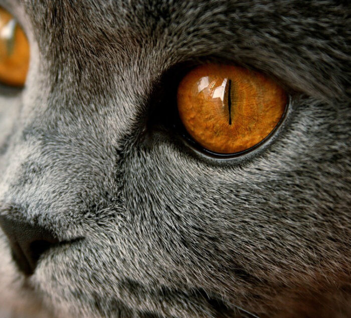 Как видят кошки