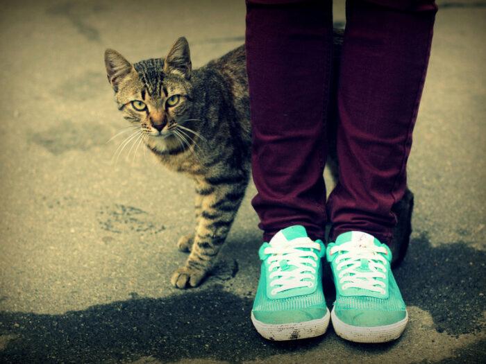 Кошки трутся о ноги человека