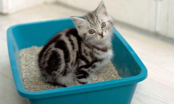 Как отучить кошку гадить в неположенном месте?