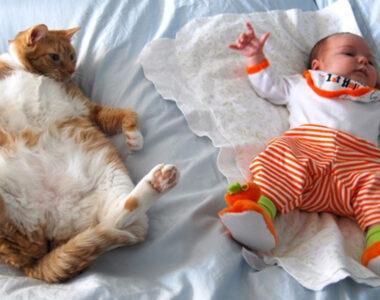 Кошки имитируют детей