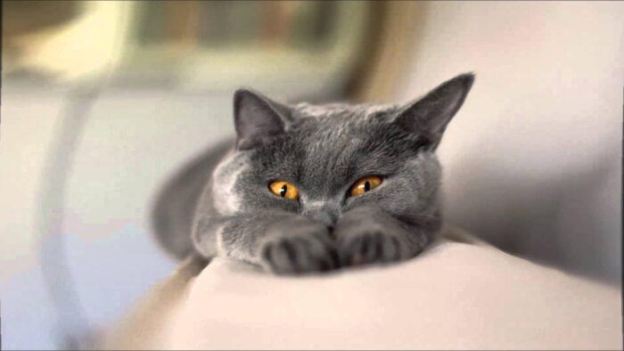 Сны о кошках