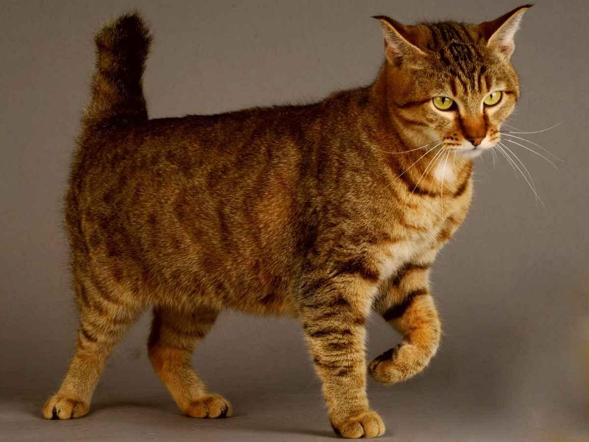 Породы котов фото с картинками