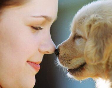 Как приручить щенка