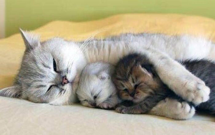 Котенок и сон