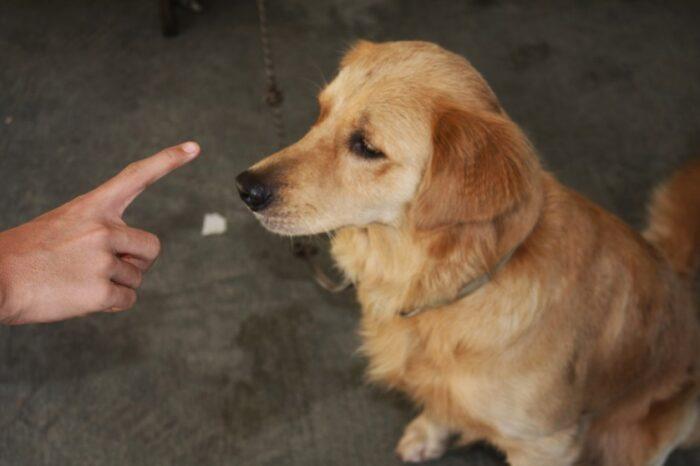 Как дрессировать щенка